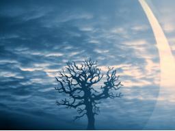 Webinar: Individual Traumdeutung Einzelberatung