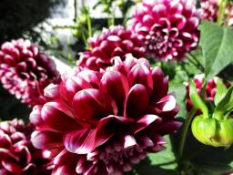 Webinar: Healing Flowers - die Blumen der Engel