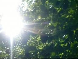 Webinar: Grüner Star - na und ?
