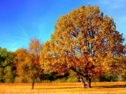 Webinar: Reise zu Deinem inneren Ruheort