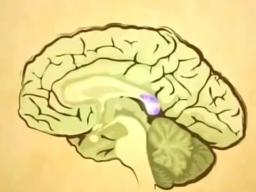 Webinar: Zirbeldrüse: Kristallaktivierung und Öffnung des 3. Auges