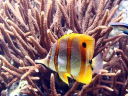 Webinar: In die Konzentration kommen mit den Meeresbewohnern