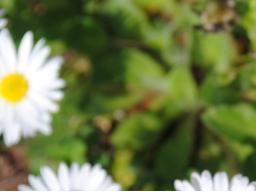 Webinar: SOMMER- SPECIAL: Einweihung in Kundalini Reiki Grad 1 nur EUR 11,11