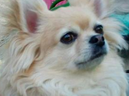 Webinar: Tierkommunikation inkl. Heilübung (Schock - Schmerzen)