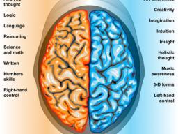 Webinar: Informationswebinar: Wie du dein Gehirn auf Vordermann bekommst