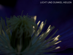 Webinar: Licht und Dunkel heilen