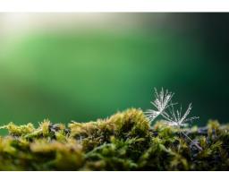 Webinar: Naturwesengeflüster mit Live-Meditation