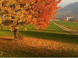Webinar: Vollmond im Oktober (Waage)