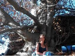 Webinar: Die wunderbare Heilkraft der Bäume und des Waldes