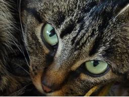 Webinar: Tod und Sterben aus Sicht der Tiere