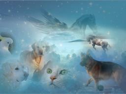 Webinar: Ausbildung Quantox-Tierlichtheiler