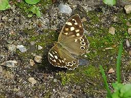Webinar: Veränderungen mit Deinem Schmetterlingskrafttier meistern ! (Mediale Kartenlegung)