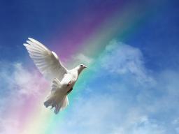 Webinar: Lehrer des Lebens und deine spirituelle Wahrheit (Lebensaufgabe 5)