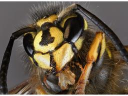 Webinar: Live-Channeling mit Sabine Richter - Thema Bienen, Wespen und andere Insekten
