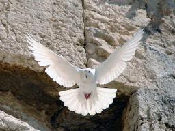 Webinar: DAS WUNDER DER OFFENEN HIMMEL - CHRISTUS UND DAS PFINGSTWUNDER - DEINE WERT-SCHÄTZUNGS-GABE: paypal.me/indigocrystal