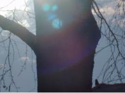 Webinar: Erneuerung- Sonne in Widder
