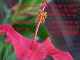 Webinar: Schnupperwebinar Astrologie und Blütentherapie