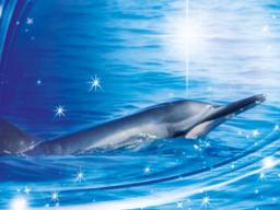 Webinar: Delfine und Hawaii  Surfe auf der Welle der Leichtigkeit