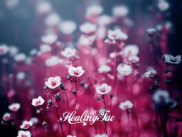 Webinar: Дыхание яичниками и дыхание маткой