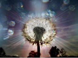 Webinar: Matrixklärung Bereich Astralkörper