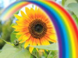 Webinar: Lebensfreude für Dich und Frieden für unsere Erde