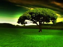 Webinar: Verbinde Dich mit der Energie der Bäume
