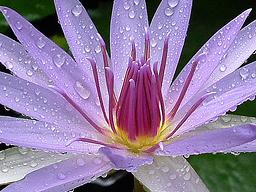 Webinar: Raum für Heilung und Meditation