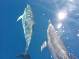 Webinar: Delfin Kristallenergie - Einzelsitzung