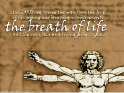 Webinar: HEBRÄISCHE EMUNAH-MEDITATION - DER HAUCH DES LEBENS