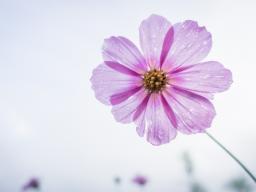 Webinar: Finde tiefer zu Dir - Transformation in einer Zeit des Umbruchs - 5.Teil -VortexHealing® Energy Healing