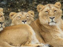 Webinar: Löwe -Neumondenergie - die Fülle annehmen