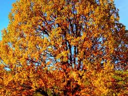 Webinar: Licht, Leichtigkeit und Wärme gegen Herbststimmung