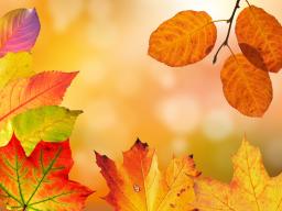 Webinar: Jahreskreisfest ♥ Herbsttagundnachtgleiche