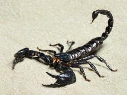 Webinar: Astrologie lernen * Der Skorpion Aszendent