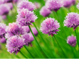 Webinar: SABINE RICHTER zu Pflanzen - Informationen auf der stofflichen und feinstofflichen Ebene