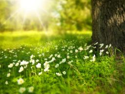 Webinar: Frühlingsmeditation