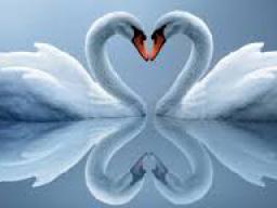 Webinar: Sei bereit für die Liebesenergie