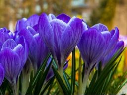Webinar: Kostenlose astrologische Vorschau für April 2017