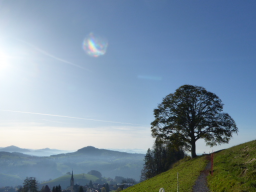 Webinar: Arcturianische Lichtkristalle