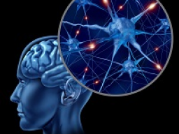 Webinar: Astromedizin 9.3: Zentrales und peripheres Nervensystem