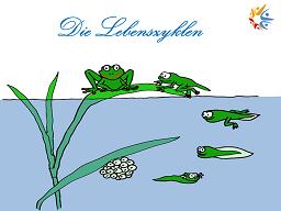 """Webinar: """"Die Lebenszyklen"""""""