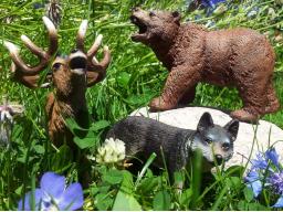 Webinar: Schamanische Krafttierreise zur Selbstfindung/ die Ratte