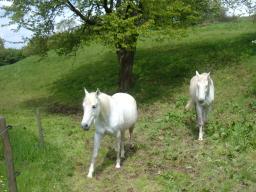 Webinar: Energetische Wirbelsäulenbegradigung für dein Tier