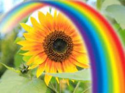 Webinar: Dein Leben in GLÜCK & FÜLLE* Transformation für Deinen Auftstieg