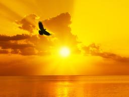 Webinar: Heilkreis zur aktuellen Energiequalität