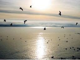 Webinar: Kostenlose Gruppen Heilung und Meditation