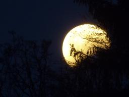 Webinar: Zur Mondfinsternis: Reise in das Heilungsfeld der Einhörner