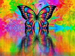 Webinar: Schmetterlings-Blick