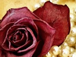 Webinar: Maria Magdalena - Meisterin der Herzen