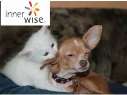 Webinar: innerwise® für dein Haustier